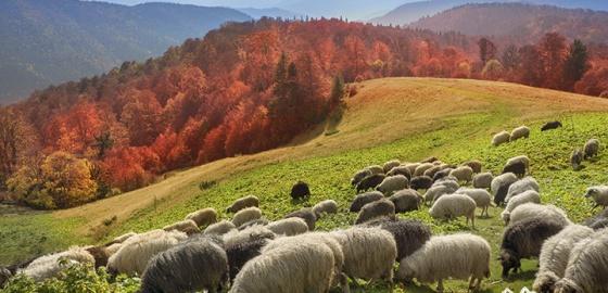 Złota jesień w Tatrach